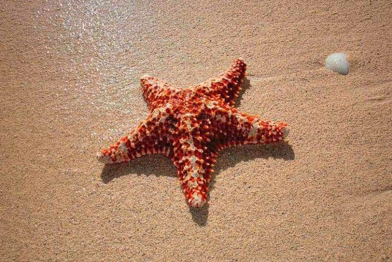 historia infantil curta as estrelas do mar