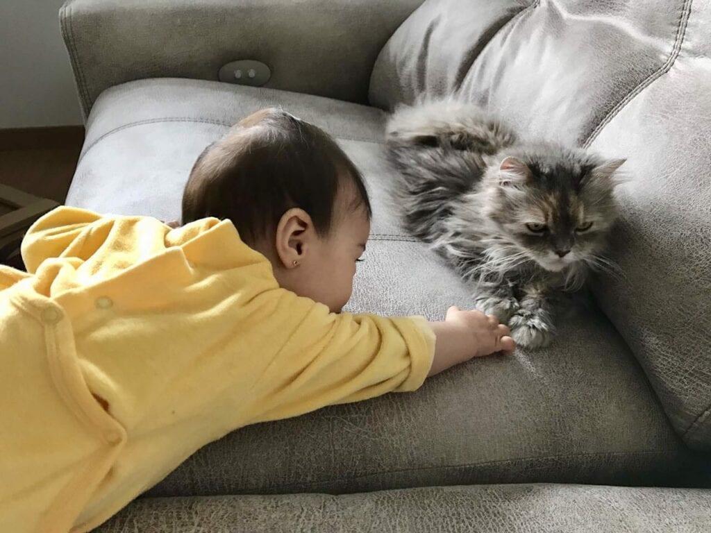 crianca afrontando duelo animal 08