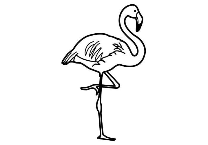 Desenhos De Flamingo Para Colorir E Pintar