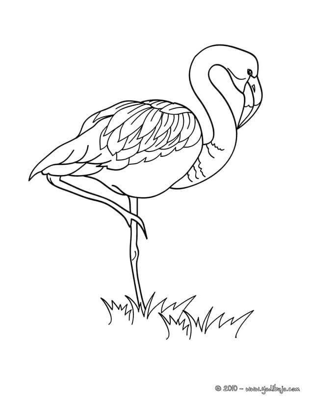 imprimir flamingo criando com apego. Black Bedroom Furniture Sets. Home Design Ideas