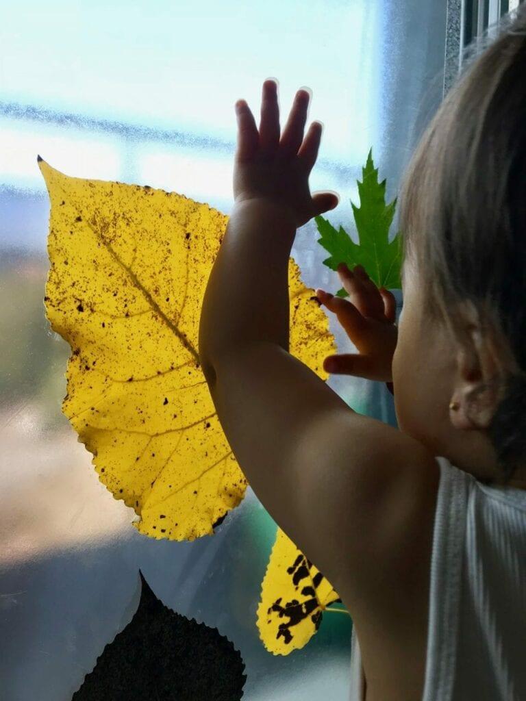 janela de outono atividades para criancas 03