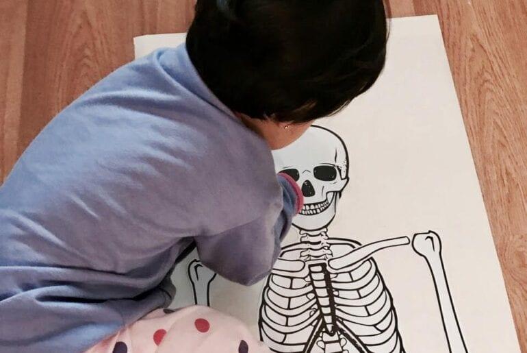 esqueleto humano completo atividades para imprimir 01