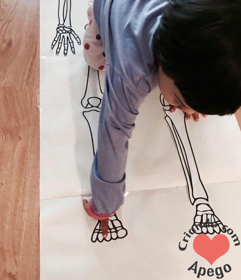 esqueleto-humano-completo-atividades-para-imprimir-06