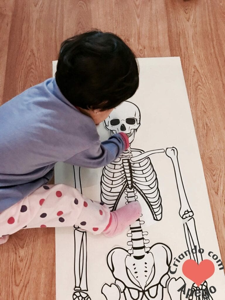 esqueleto-humano-completo-atividades-para-imprimir-08