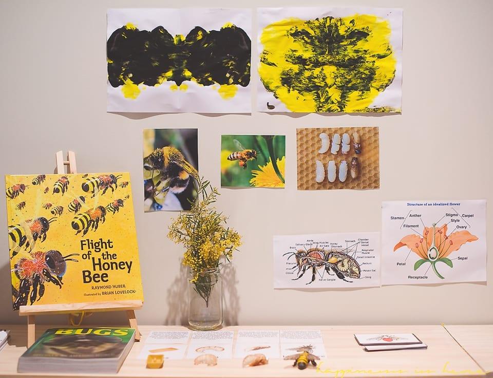 Atividades de abelha metodo montessori 08