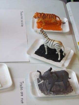 atividades sobre animais montessori pegadas