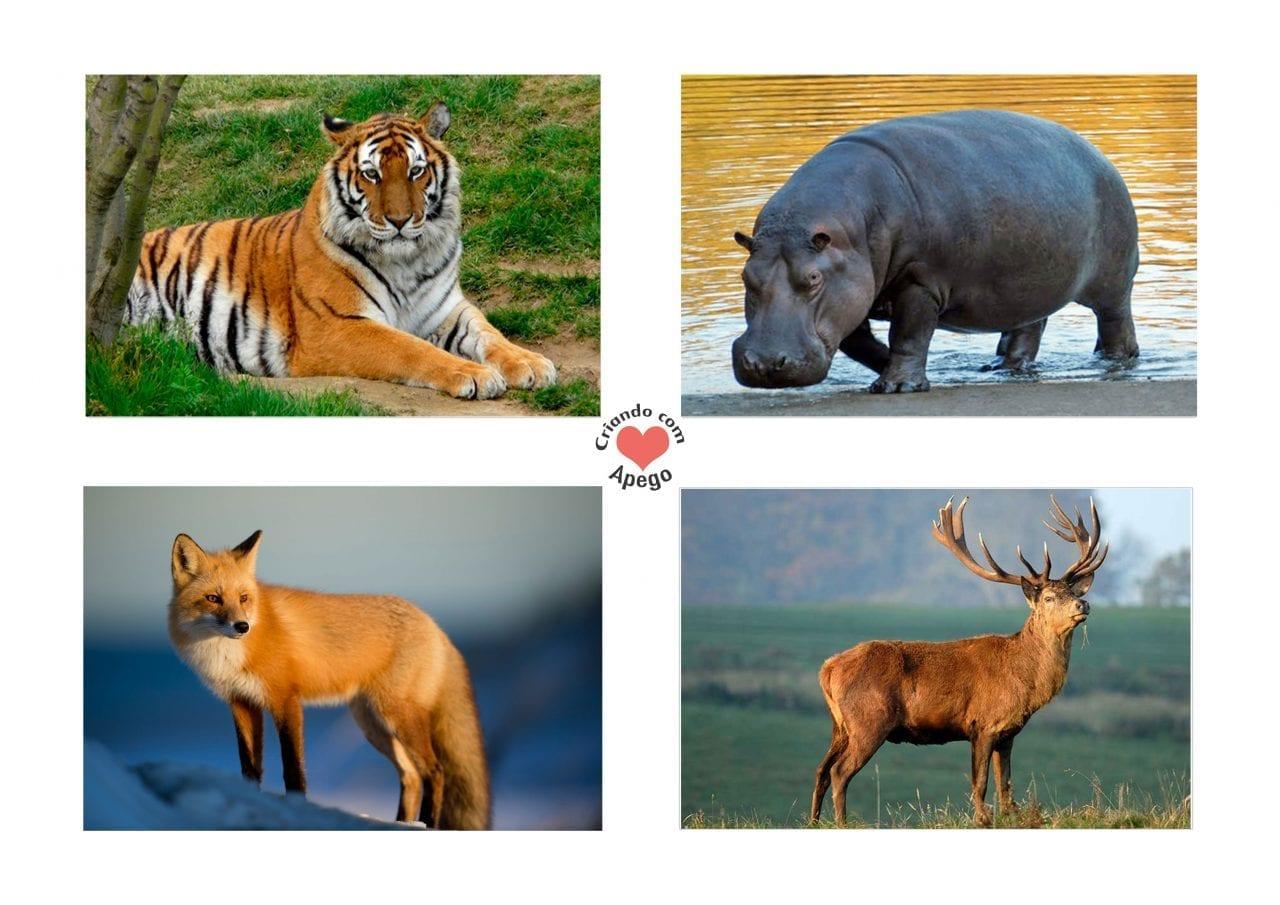Atividades Sobre Animais Selvagens Para Educacao Infantil 01