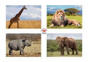 Atividades sobre animais selvagens para educacao infantil 02