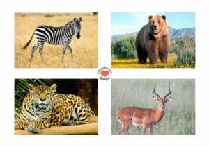 Atividades sobre animais selvagens para educacao infantil 03