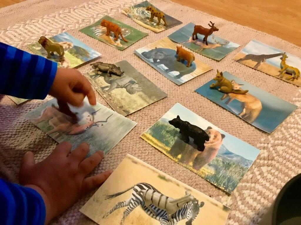 Atividades sobre animais selvagens para educacao infantil 05