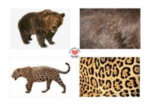 Atividades sobre animais selvagens para educacao infantil 11