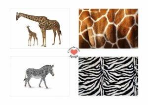 Atividades sobre animais selvagens para educacao infantil 12