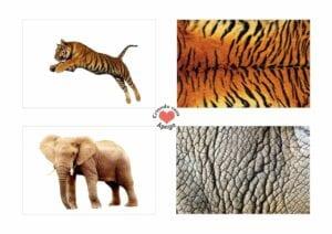Atividades sobre animais selvagens para educacao infantil 13