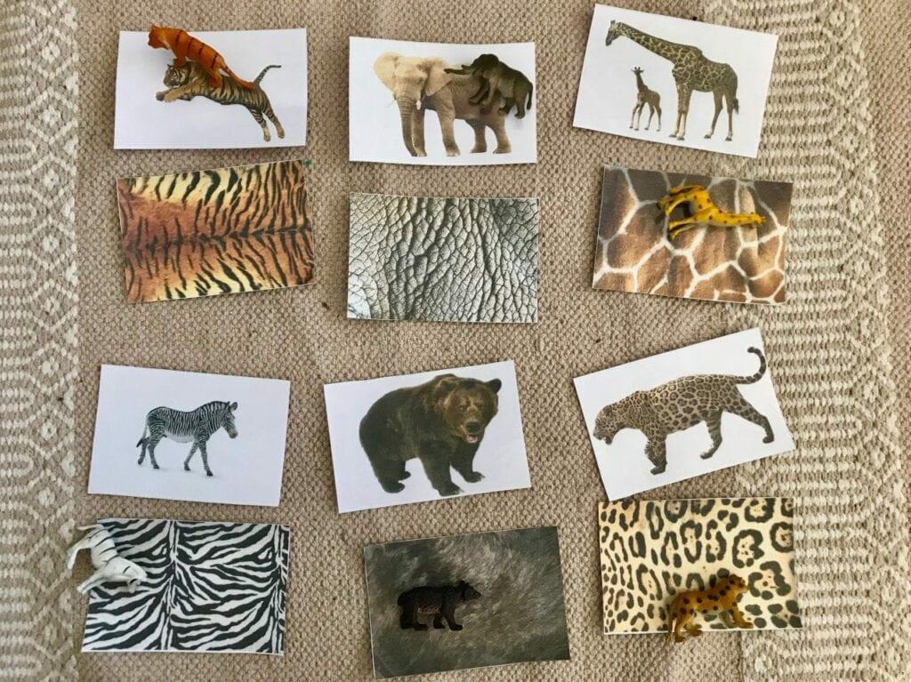 Atividades sobre animais selvagens para educacao infantil 16
