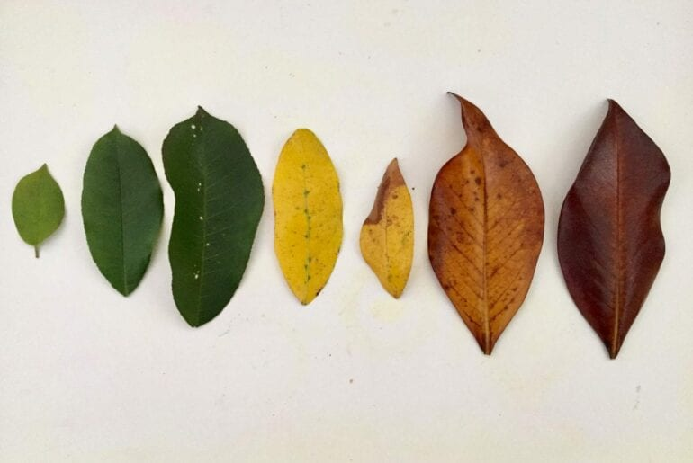 ciclo de vida da folha de outono 01