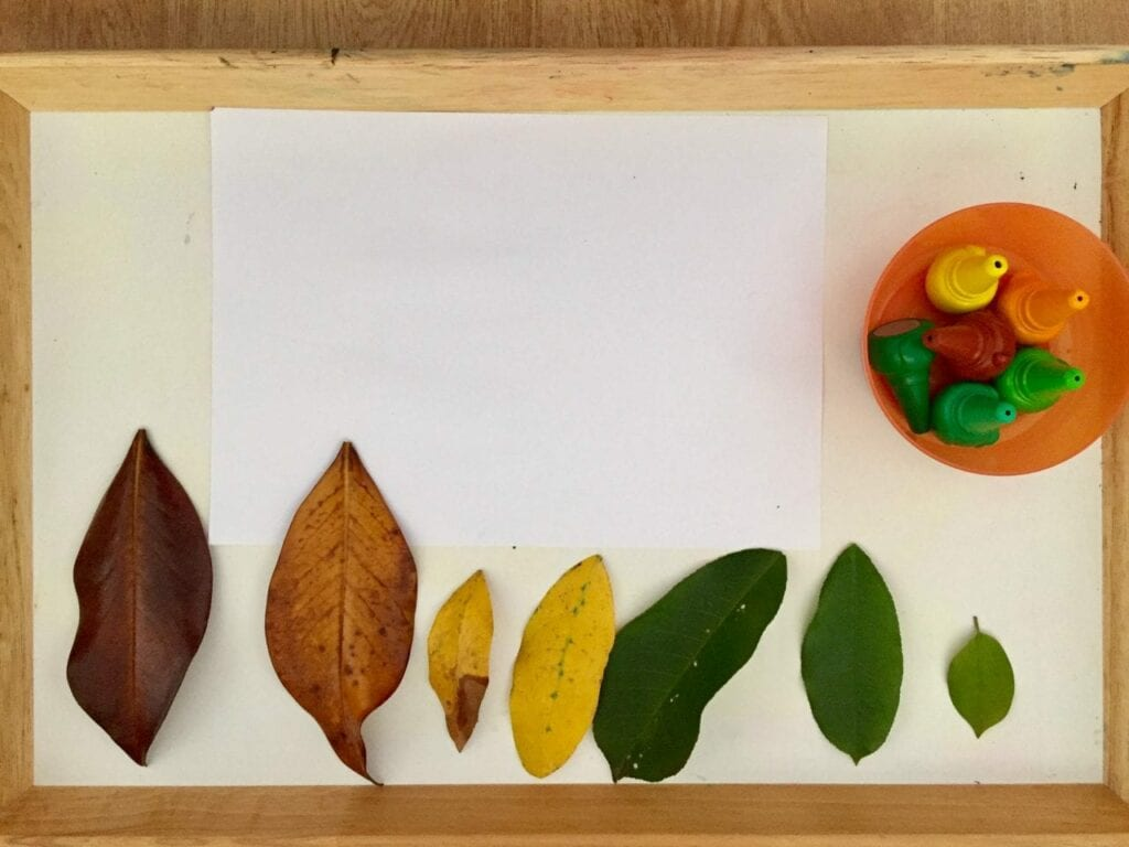 ciclo de vida da folha de outono 02