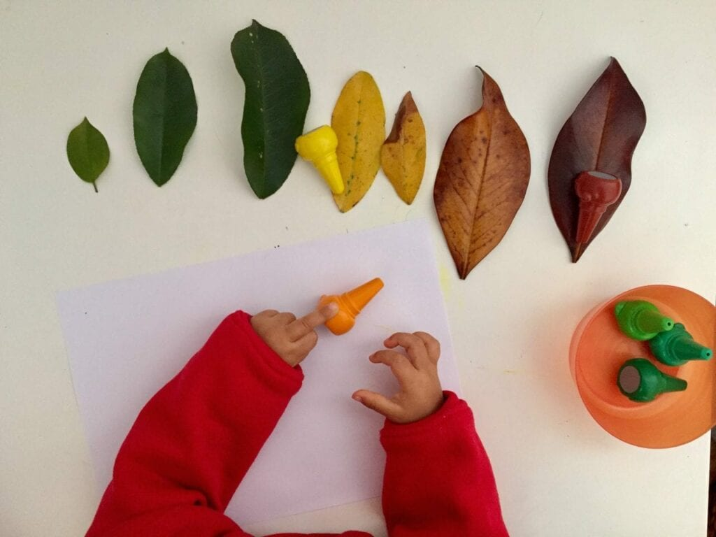 ciclo de vida da folha de outono 03