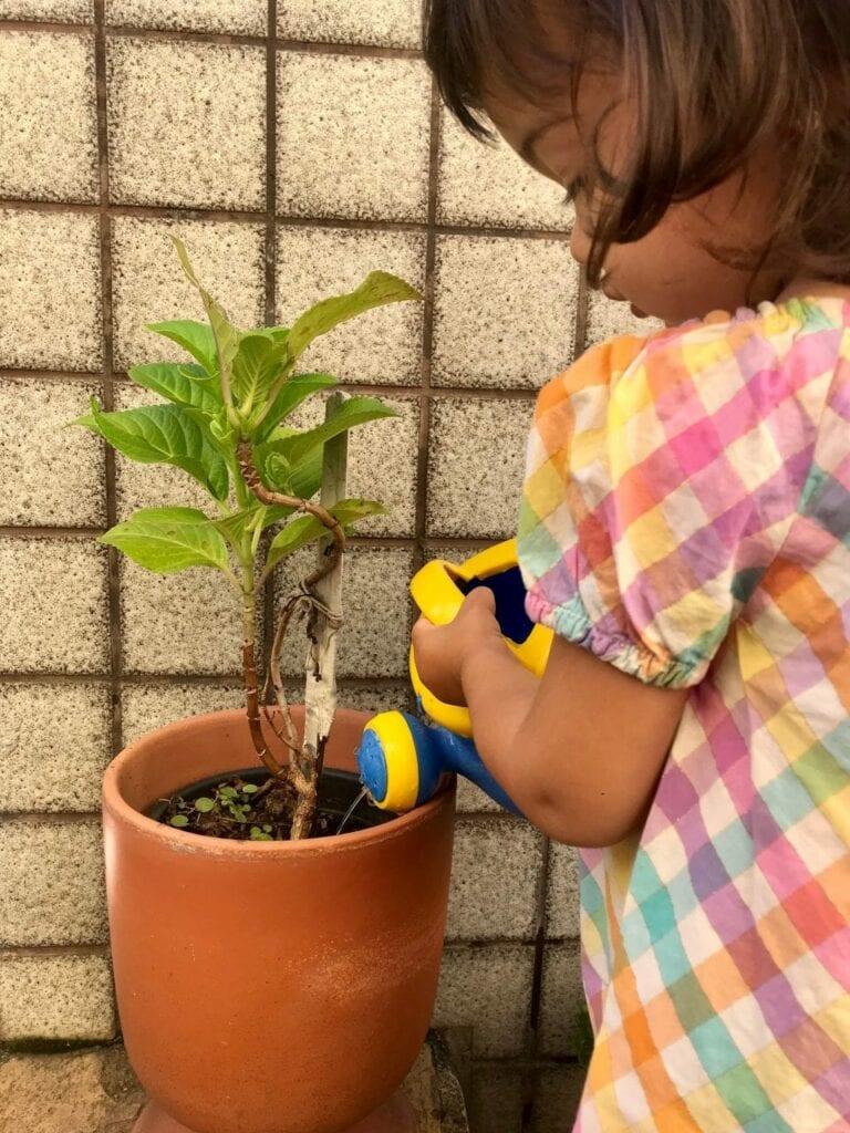 regar plantas vida pratica montessori 05
