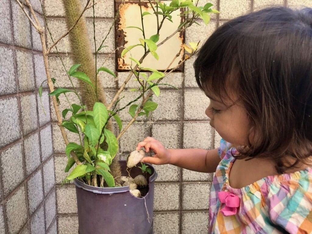regar plantas vida pratica montessori 06