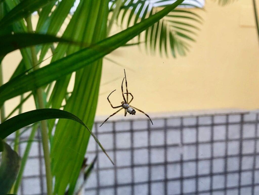 atividade ciclo de vida da aranha 02