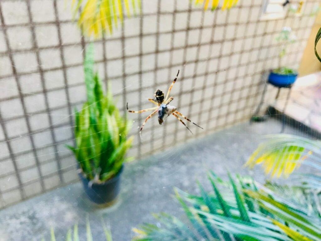 atividade ciclo de vida da aranha 06
