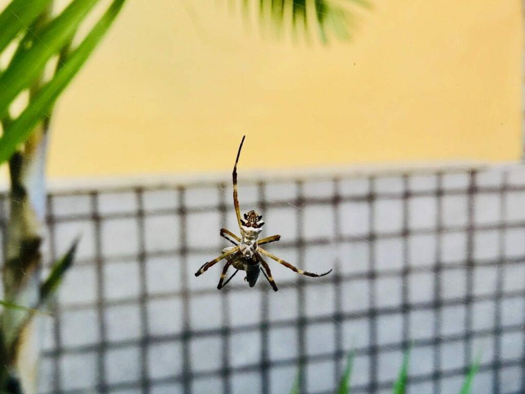 atividade ciclo de vida da aranha 10