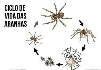 atividade ciclo de vida da aranha 14