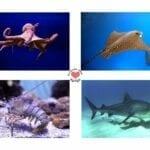 atividade de pareamento de animais marinhos 01