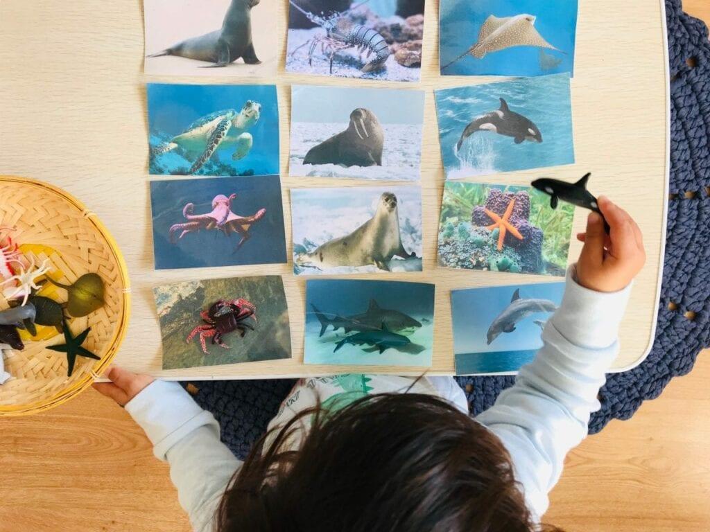 atividade de pareamento de animais marinhos 02