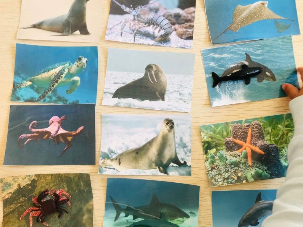 atividade de pareamento de animais marinhos 03