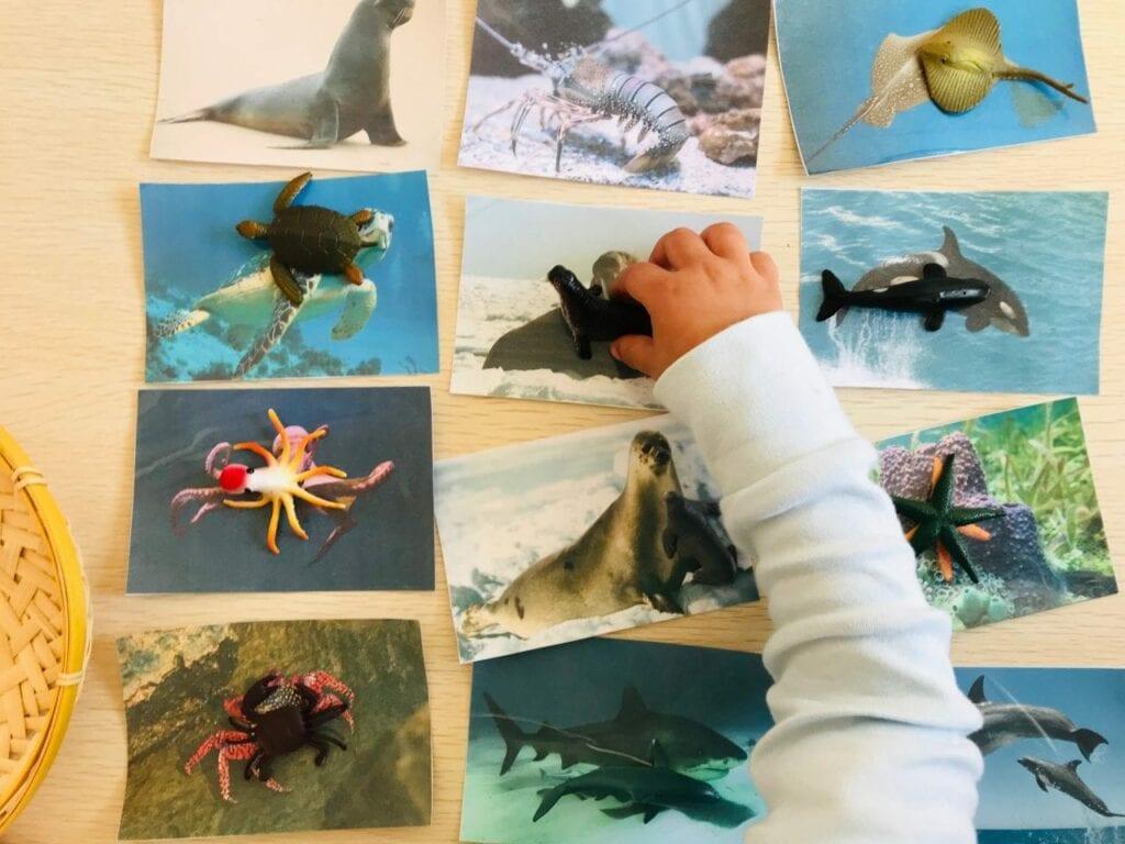 atividade de pareamento de animais marinhos 04