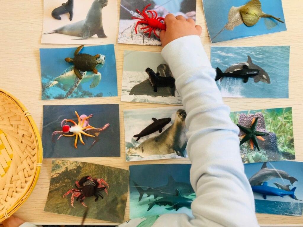 atividade de pareamento de animais marinhos 05