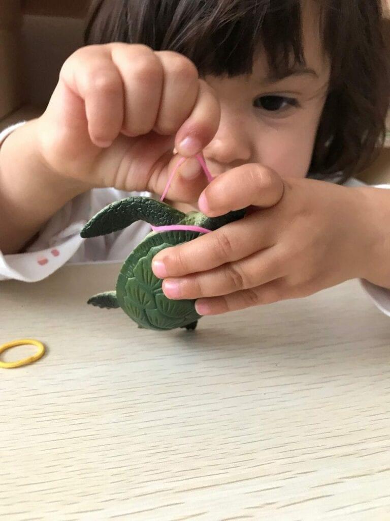 atividade de preservacao da tartaruga marinha 13