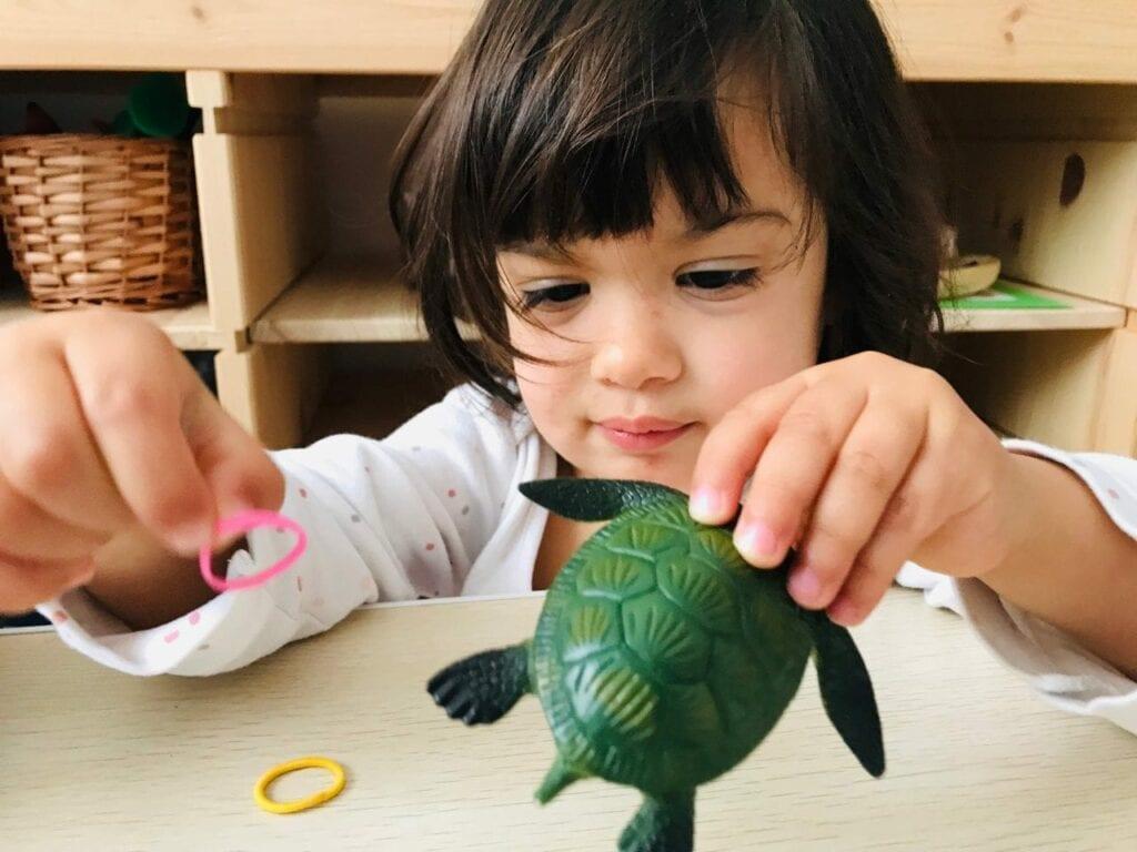 atividade de preservacao da tartaruga marinha 17
