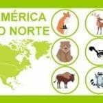 loteria dos animais do mundo 01