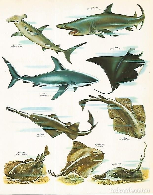 poster animais marinhos