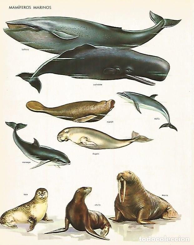 poster mamiferos marinhos