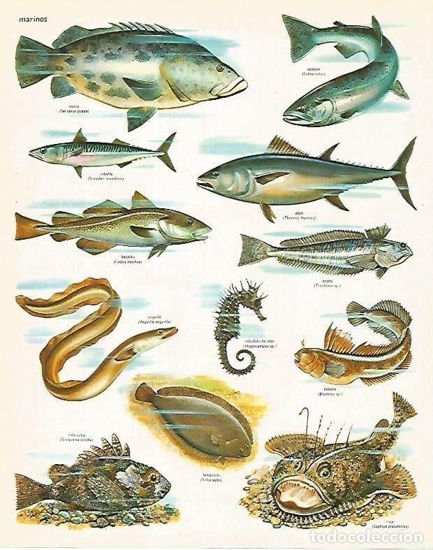 poster peixes marinhos