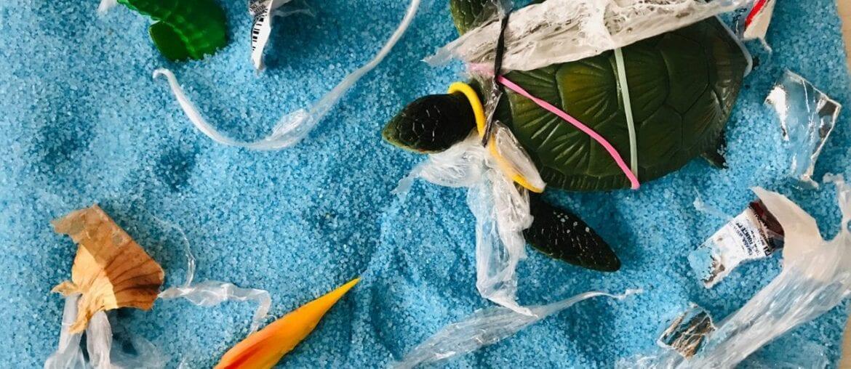 preservacao da tartaruga marinha 01