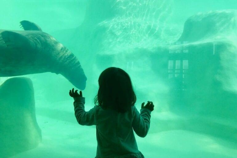 visita ao aquario animais marinhos 01
