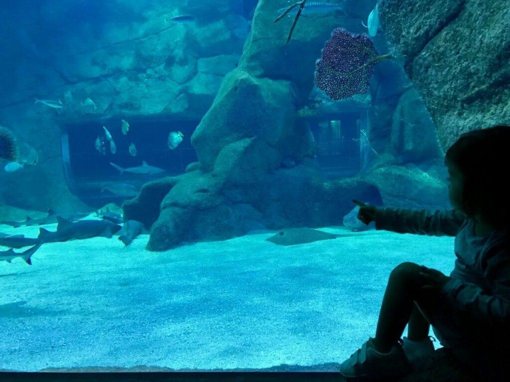 visita ao aquario animais marinhos 06