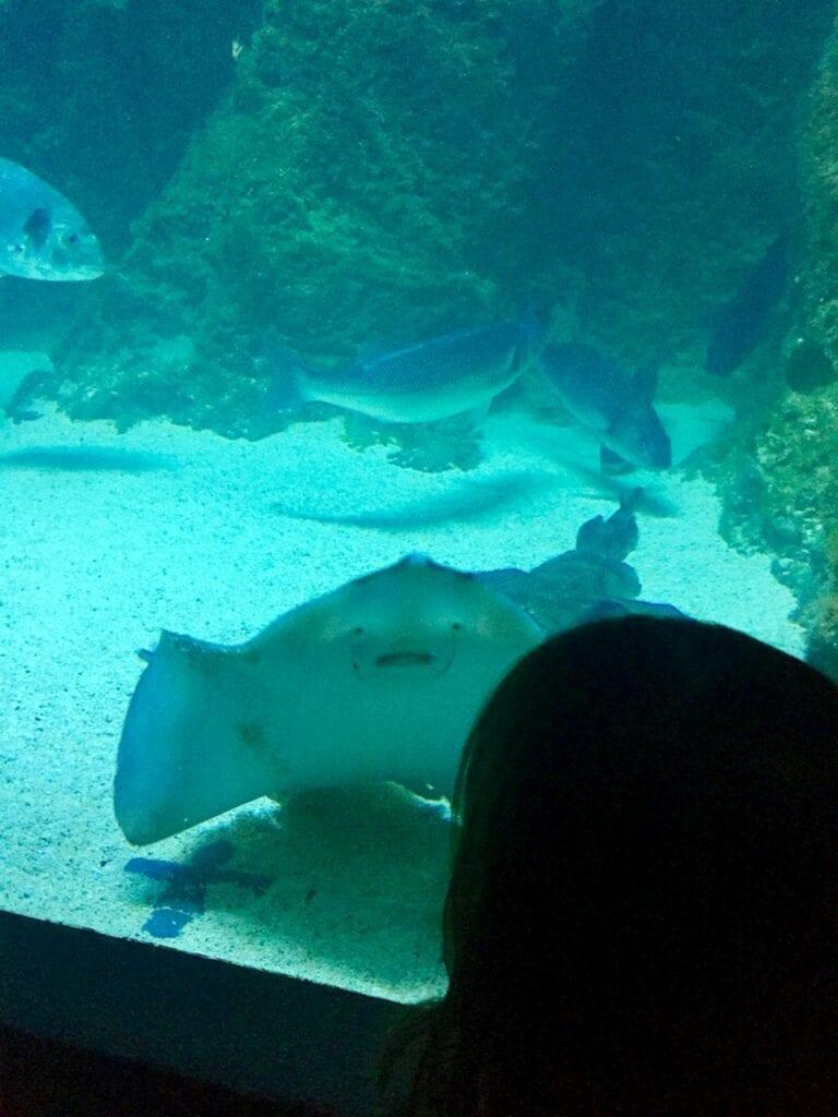 visita ao aquario animais marinhos 08