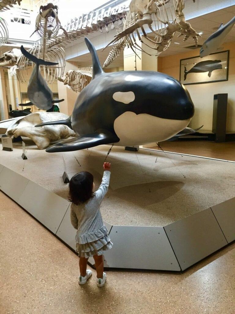 visita ao aquario animais marinhos 13