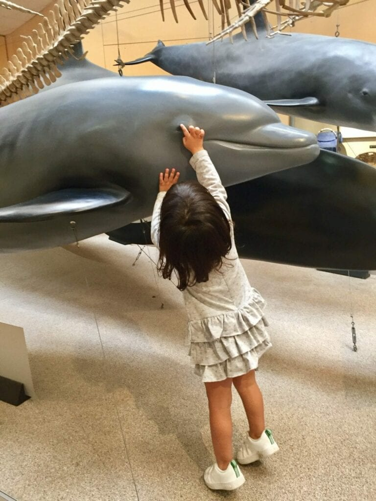 visita ao aquario animais marinhos 14