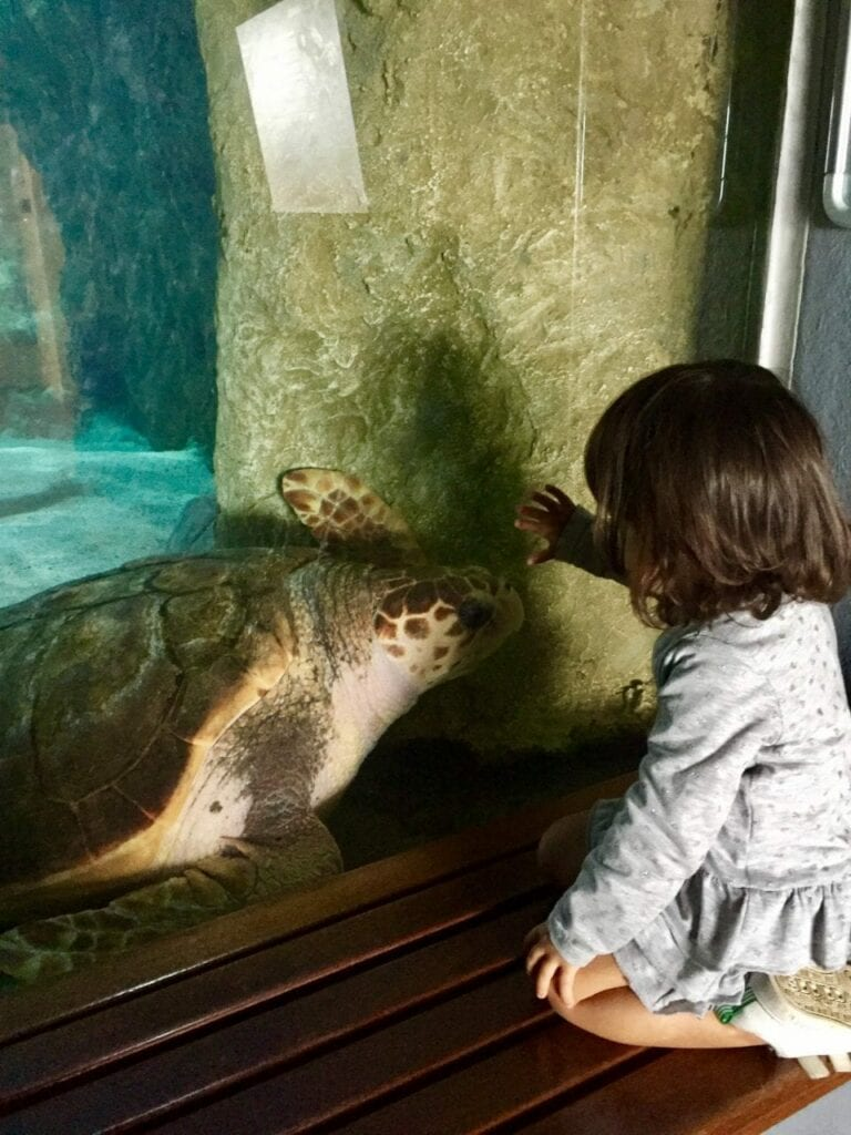 visita ao aquario animais marinhos 17