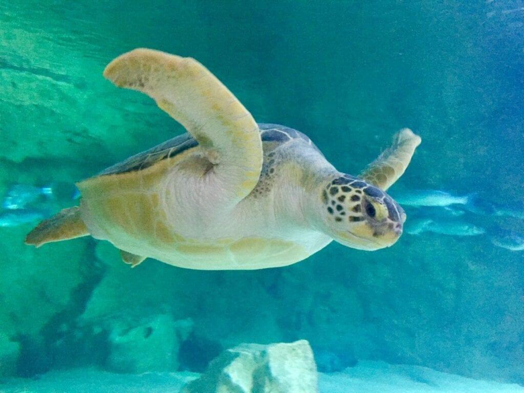 visita ao aquario animais marinhos 19