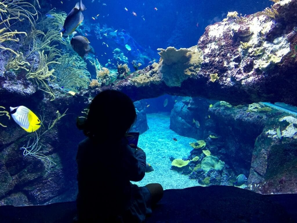 visita ao aquario animais marinhos 21