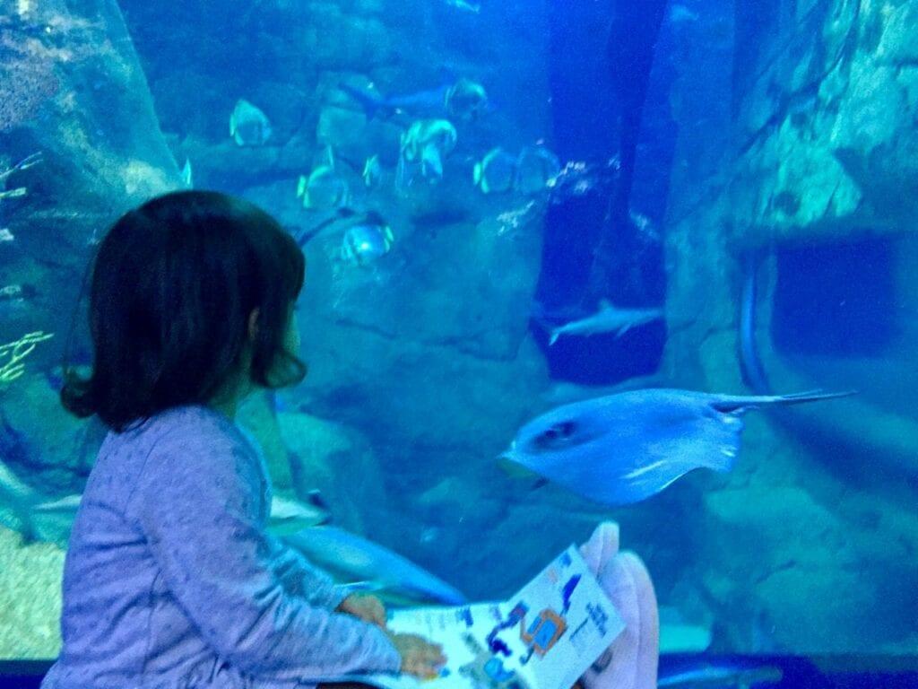 visita ao aquario animais marinhos 23