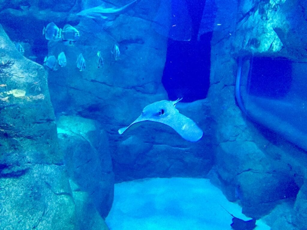 visita ao aquario animais marinhos 24