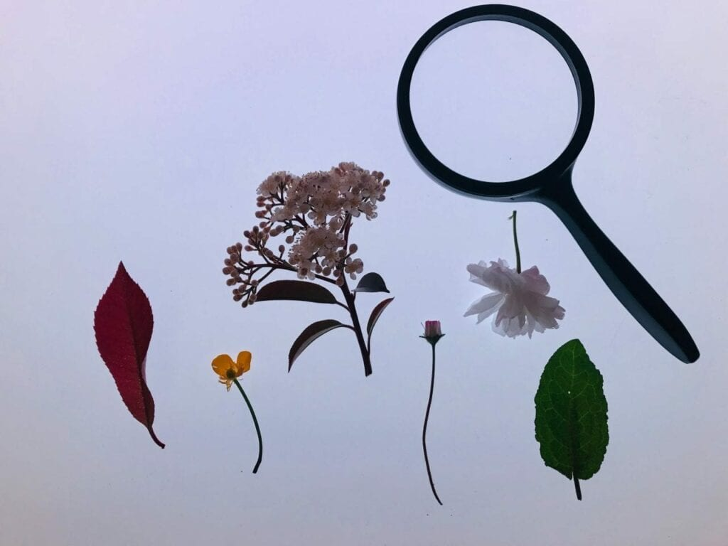 flores da primavera na mesa de luz 01